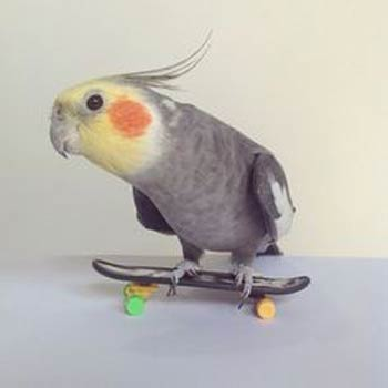 bird on a skateboard