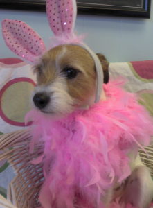 A dog in a bunny costume