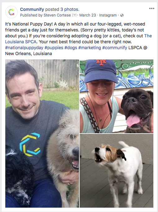 A social media post of various dogs